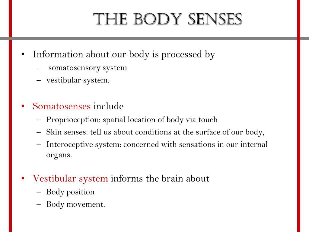 The Body Senses