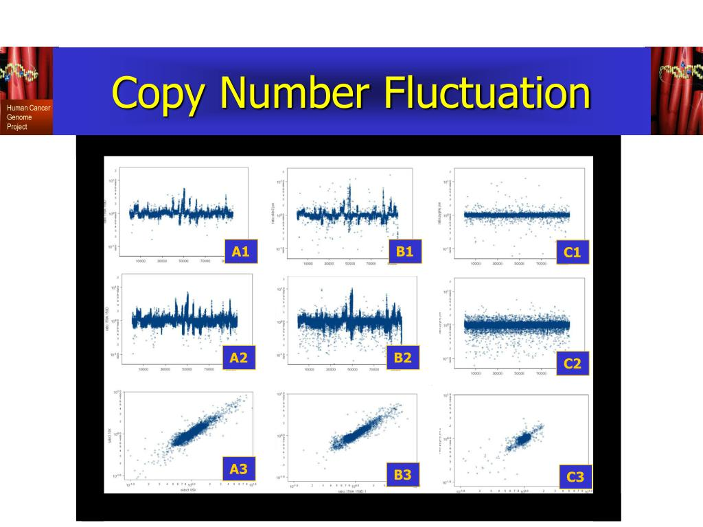 Copy Number Fluctuation
