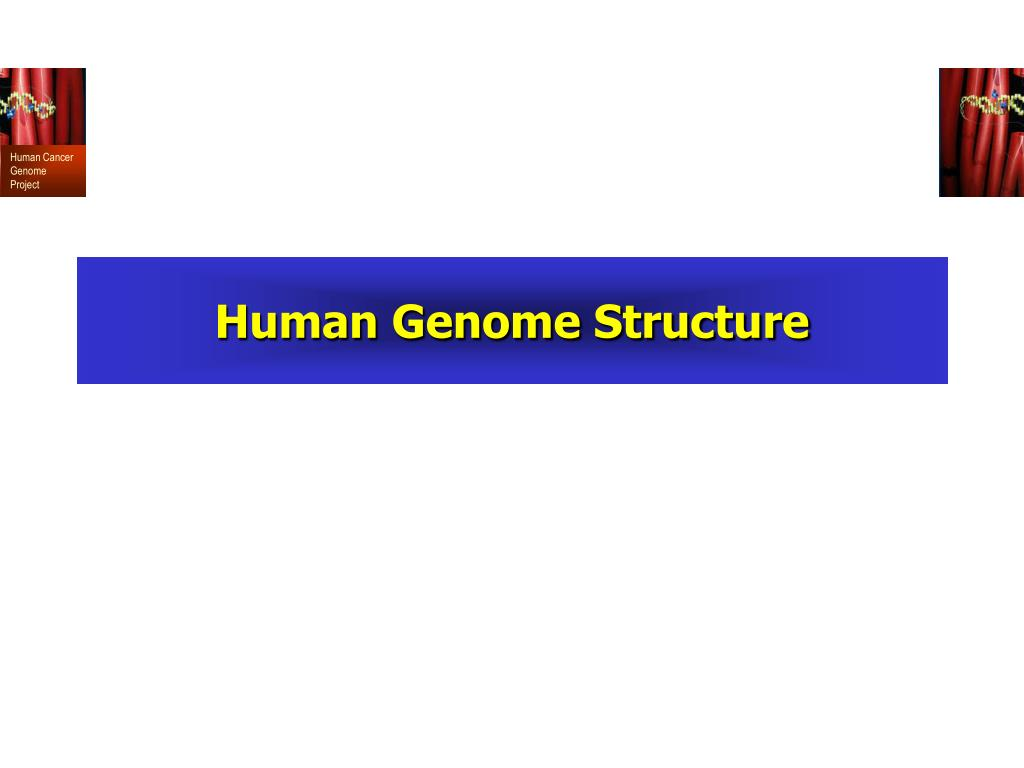 Human Genome Structure