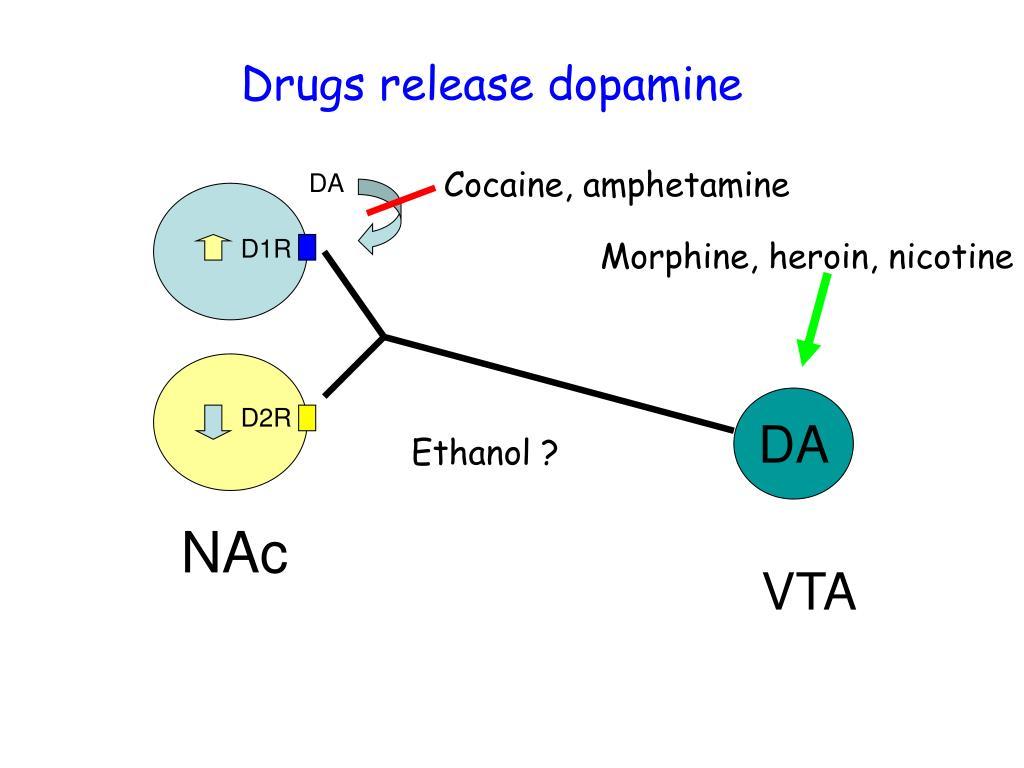 Drugs release dopamine