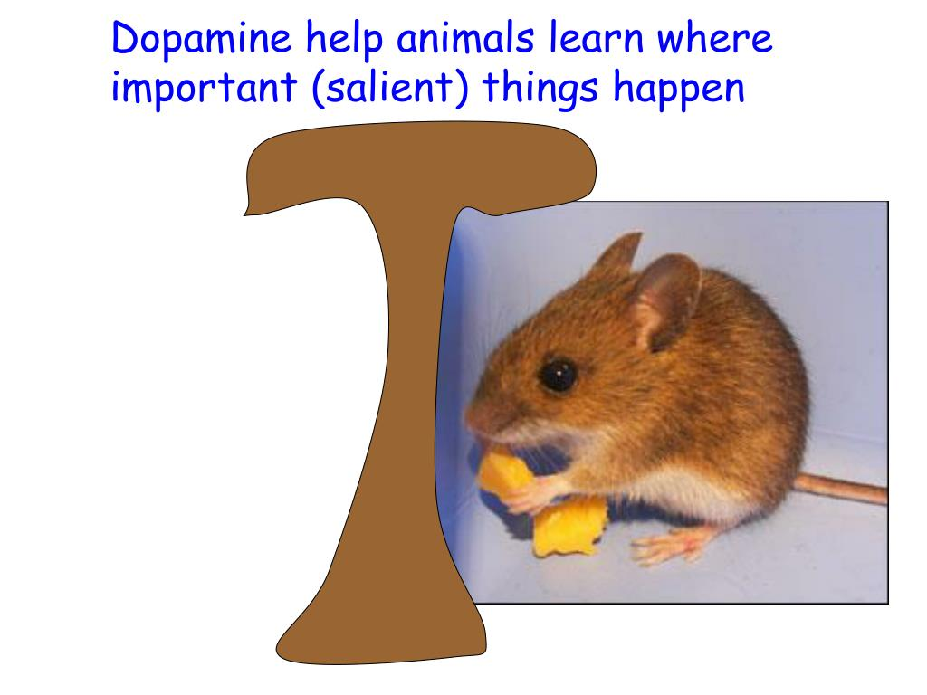 Dopamine help animals learn where important (salient) things happen