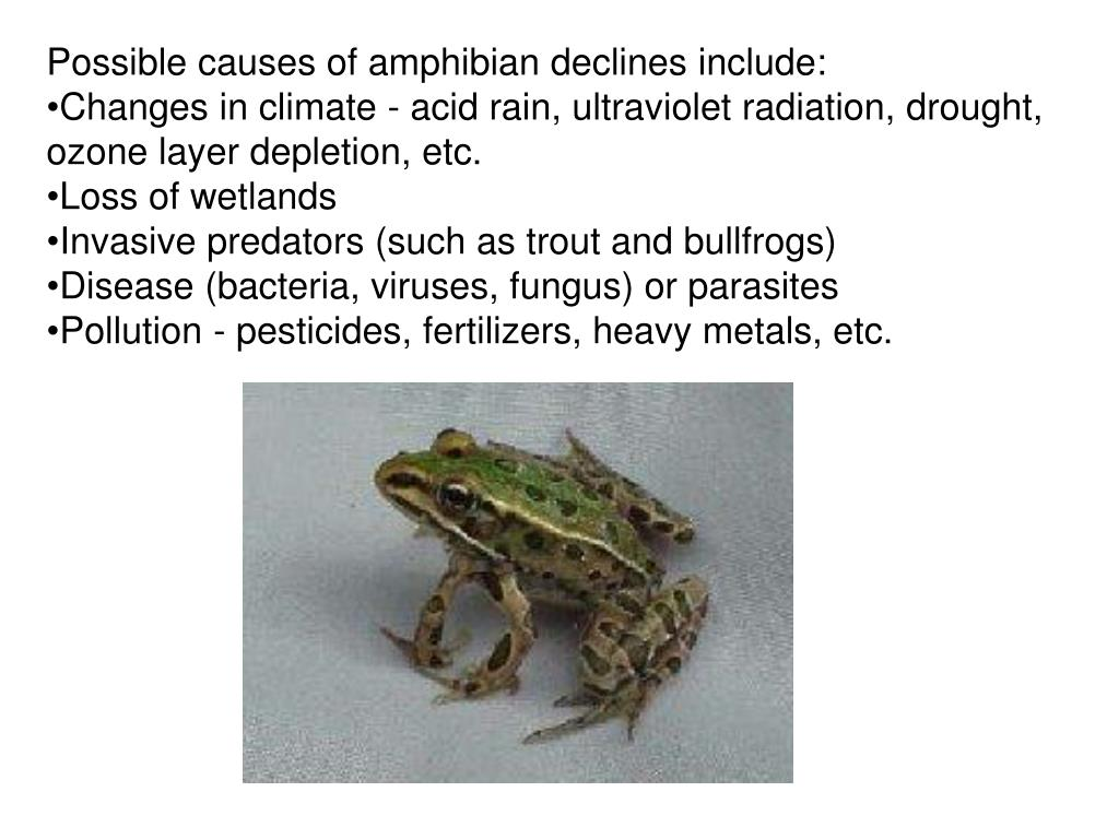 Possible causes of amphibian declines include: