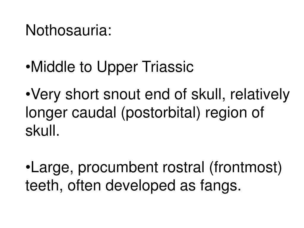 Nothosauria: