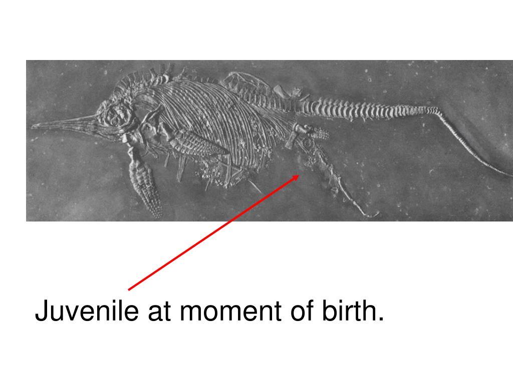 Juvenile at moment of birth.