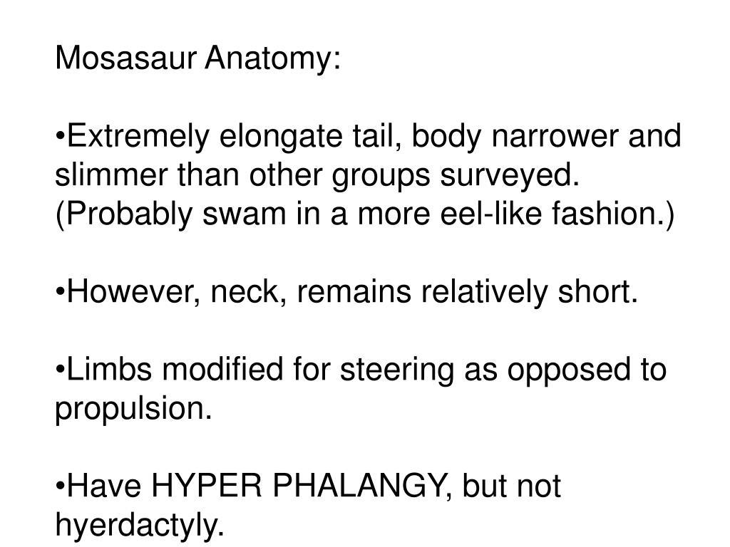 Mosasaur Anatomy: