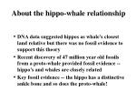 about the hippo whale relationship