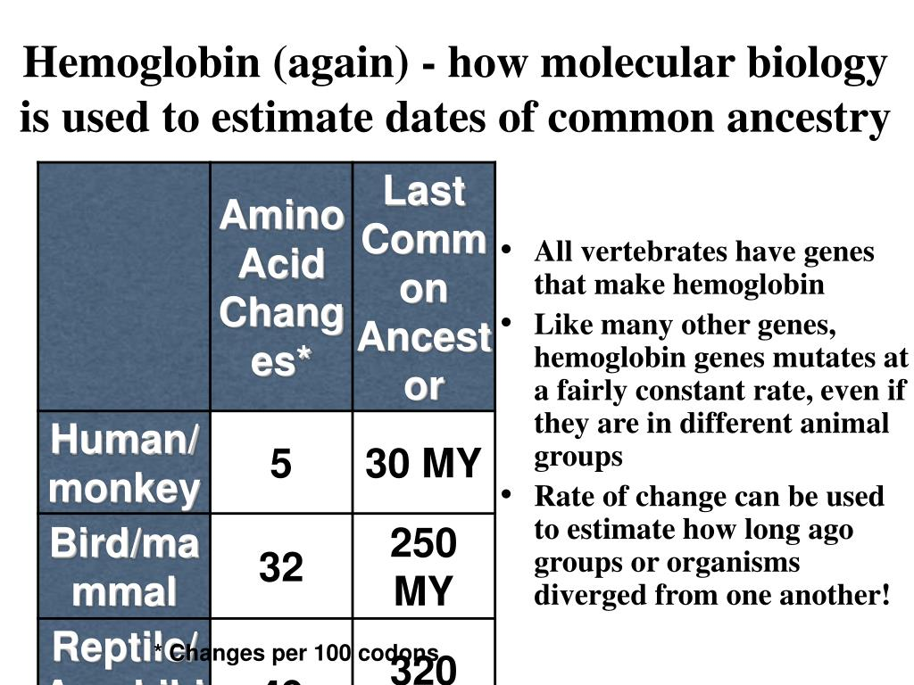 Hemoglobin (again) - how molecular biology is used to estimate dates of common ancestry
