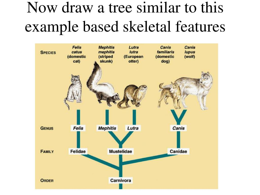 Now draw a tree similar to this example based skeletal features