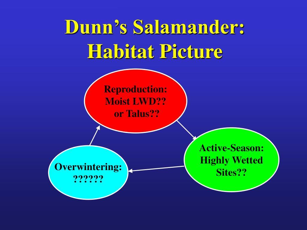 Dunn's Salamander: