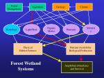 forest wetland systems