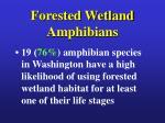 forested wetland amphibians7