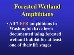 forested wetland amphibians8