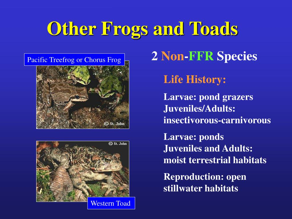 Other Frogs and Toads