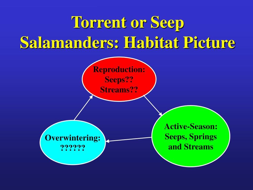 Torrent or Seep Salamanders: Habitat Picture