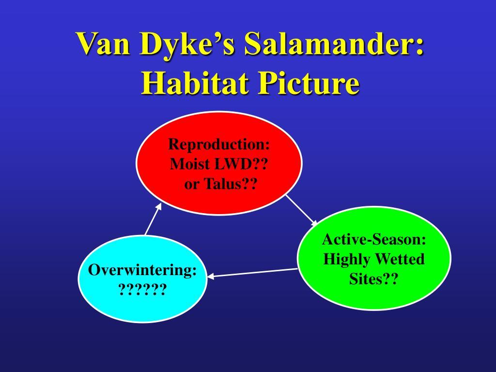 Van Dyke's Salamander: Habitat Picture
