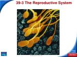 39 3 the reproductive system