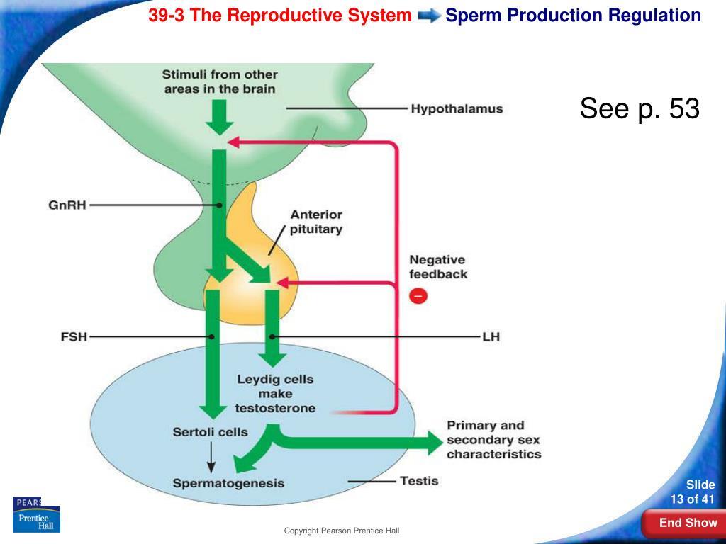 production Female sperm