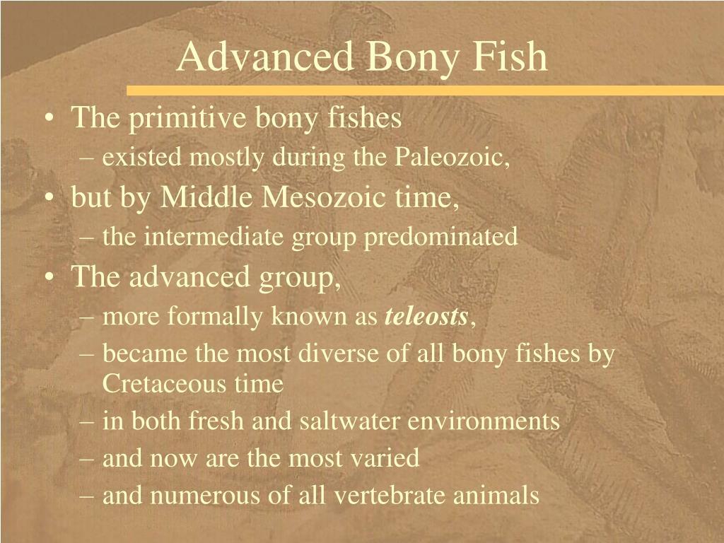 Advanced Bony Fish