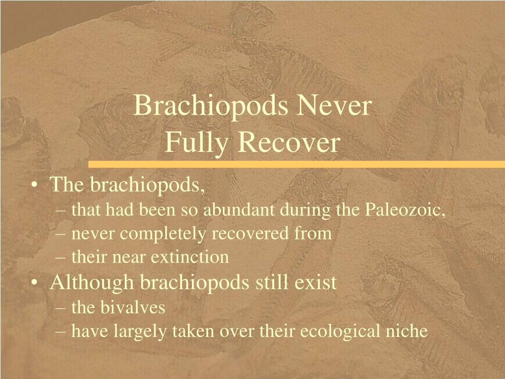 Brachiopods Never