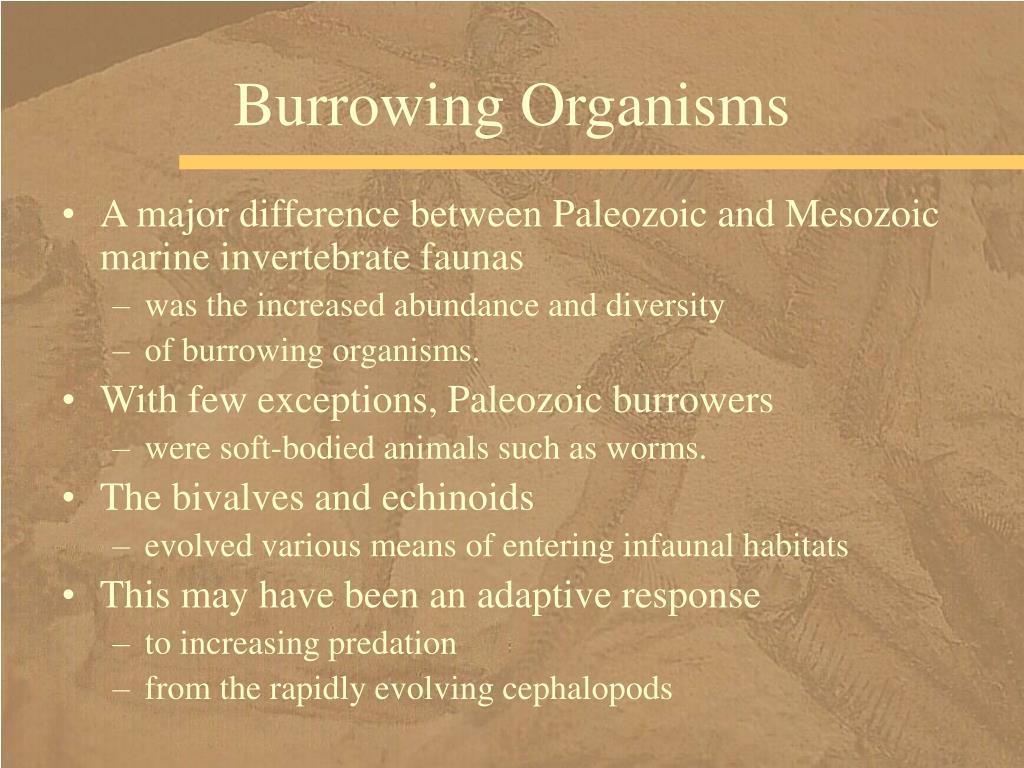 Burrowing Organisms