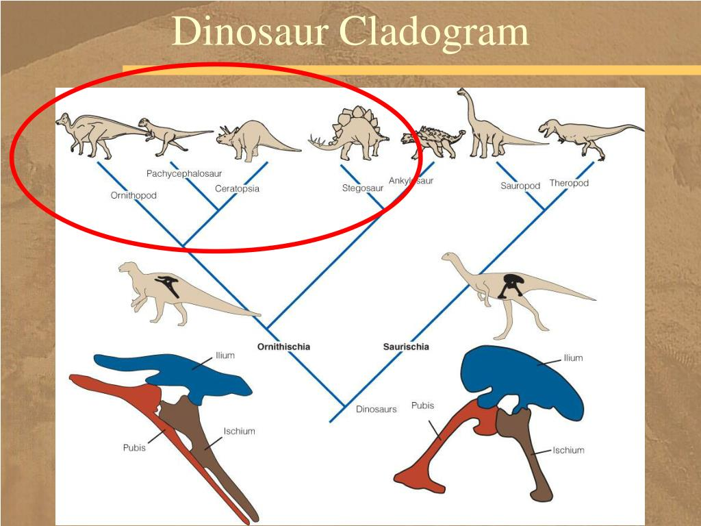 Dinosaur Cladogram