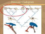 dinosaur cladogram76