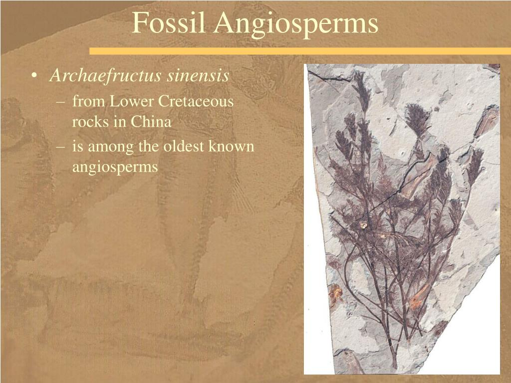 Fossil Angiosperms