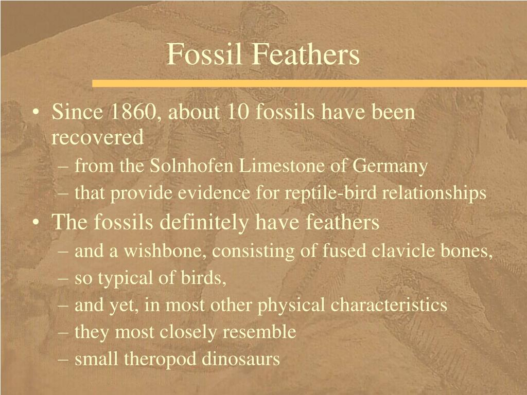 Fossil Feathers