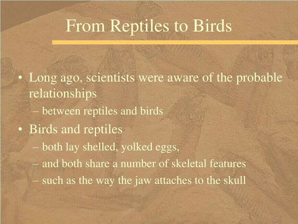 From Reptiles to Birds