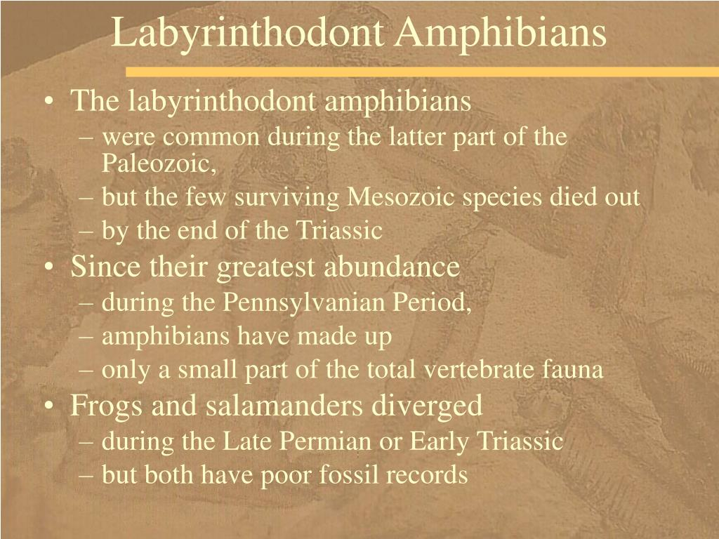 Labyrinthodont Amphibians