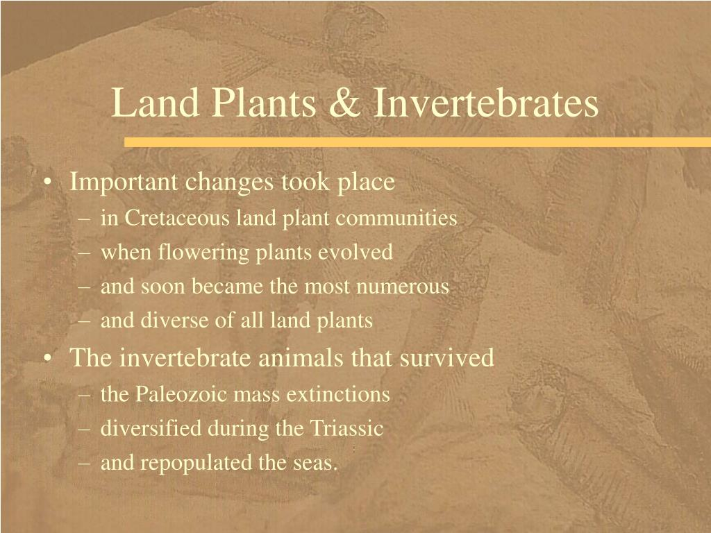 Land Plants & Invertebrates
