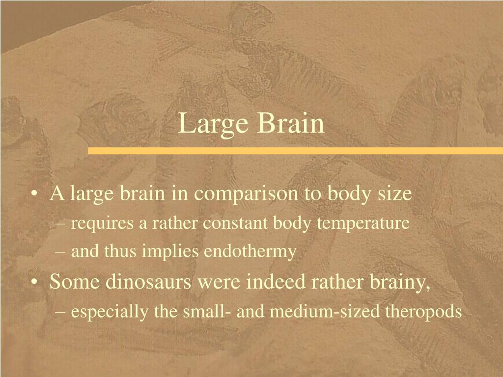 Large Brain