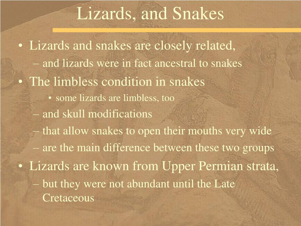 Lizards, and Snakes