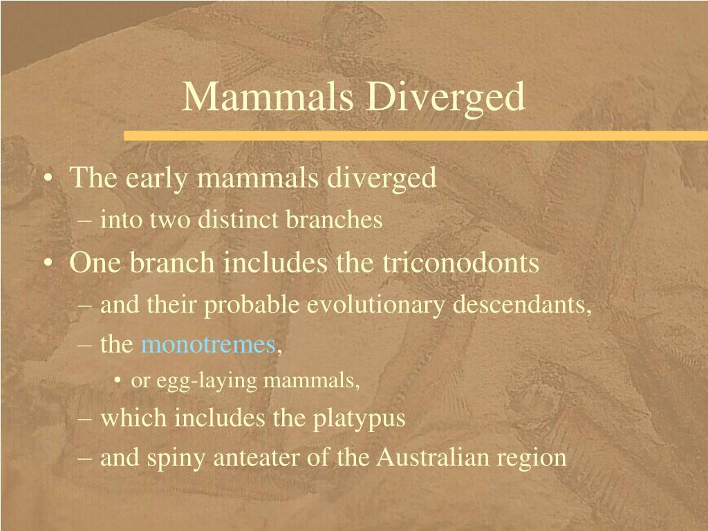 Mammals Diverged
