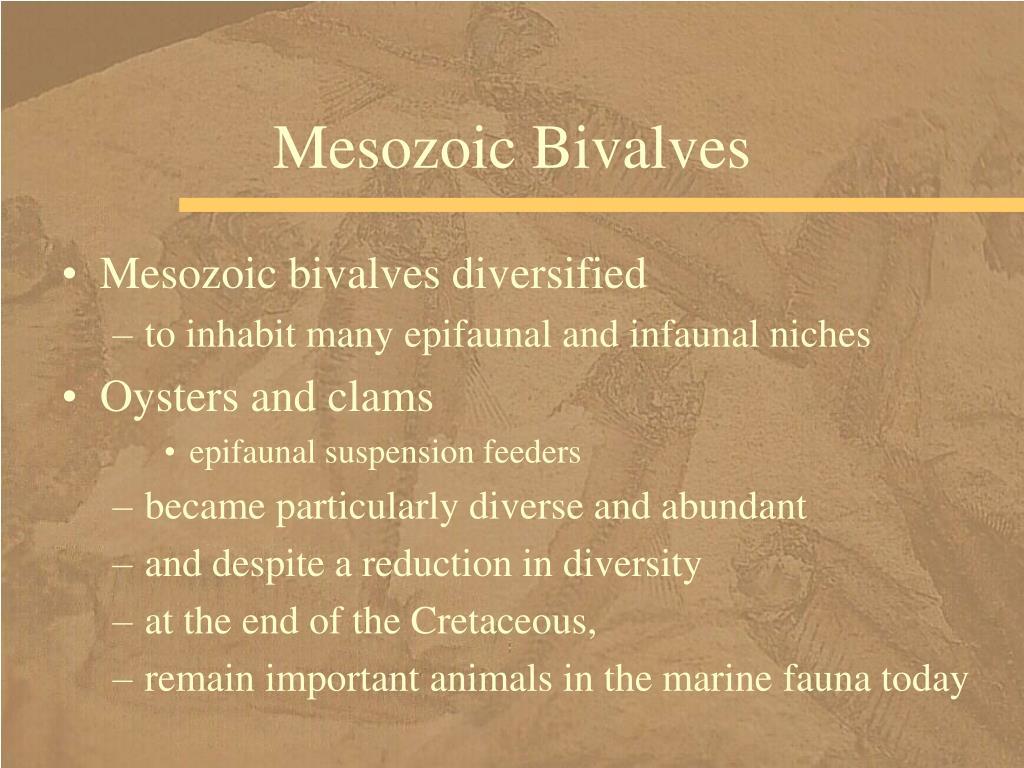Mesozoic Bivalves