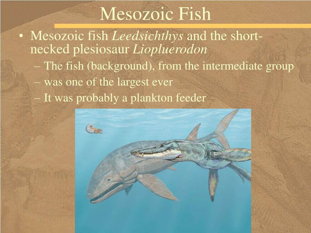 Mesozoic Fish