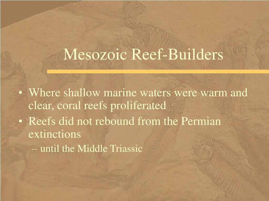Mesozoic Reef-Builders