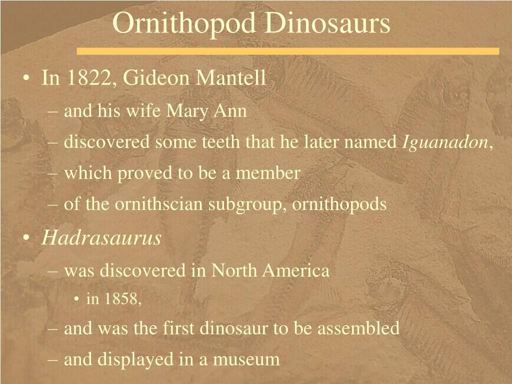 Ornithopod Dinosaurs