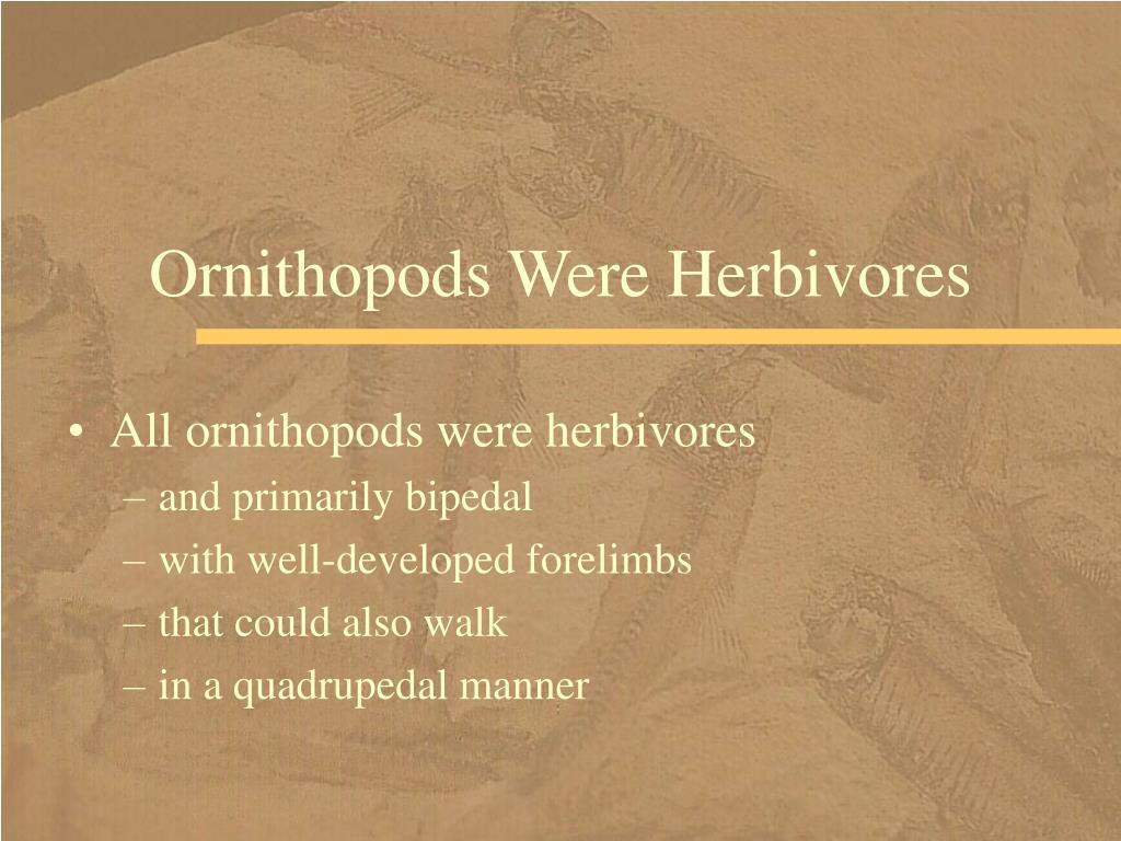 Ornithopods Were Herbivores
