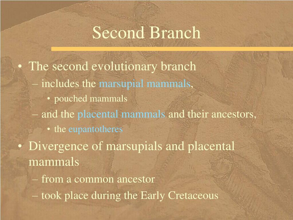Second Branch