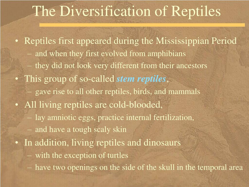 The Diversification of Reptiles