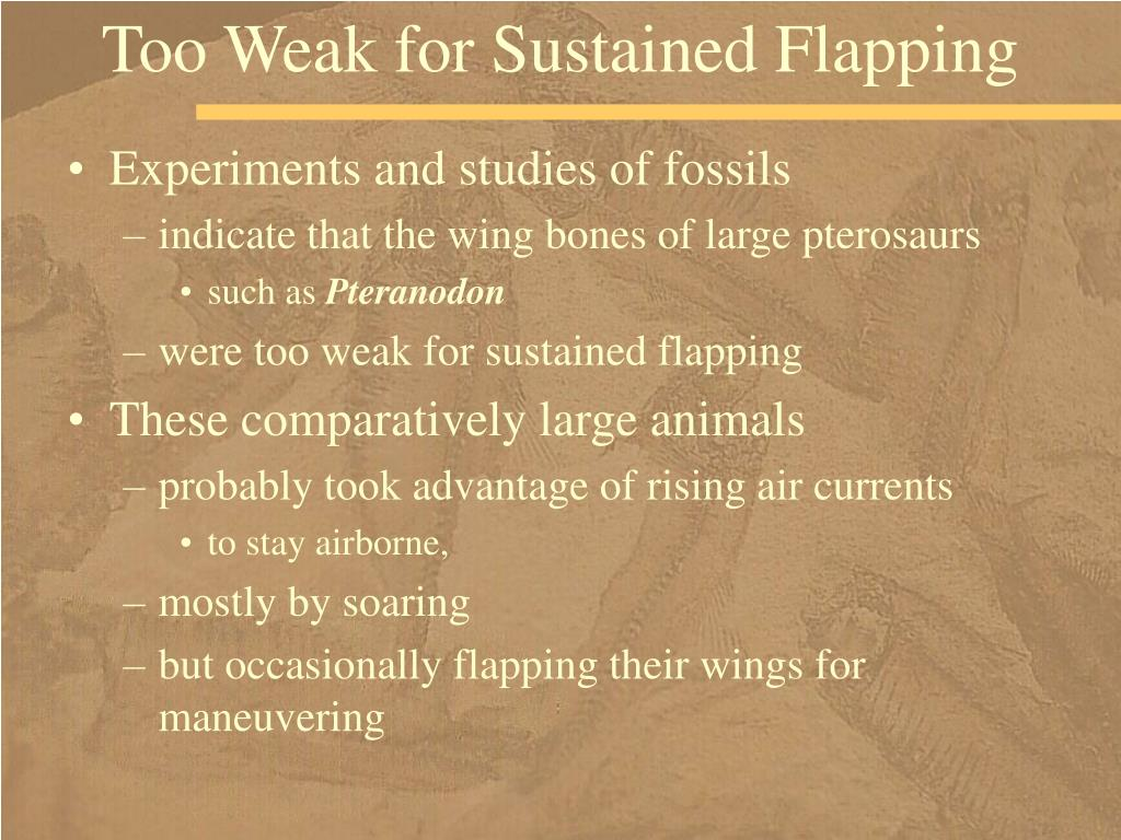 Too Weak for Sustained Flapping
