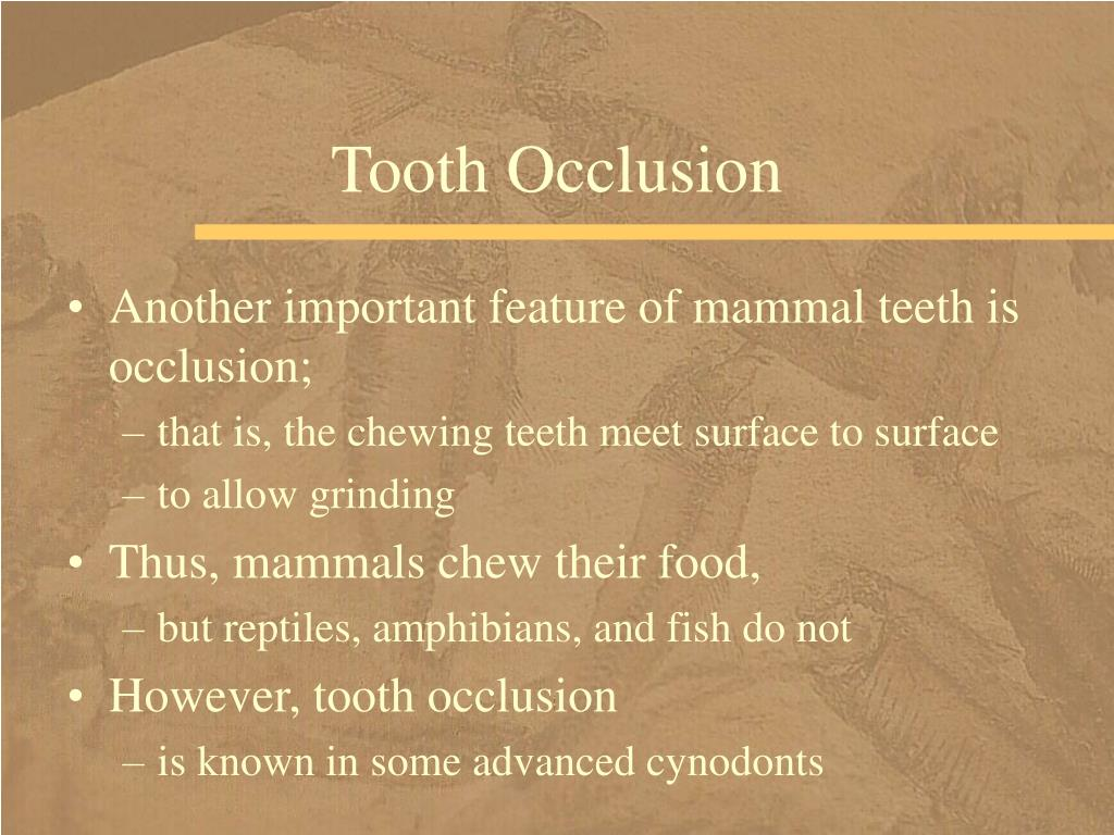 Tooth Occlusion