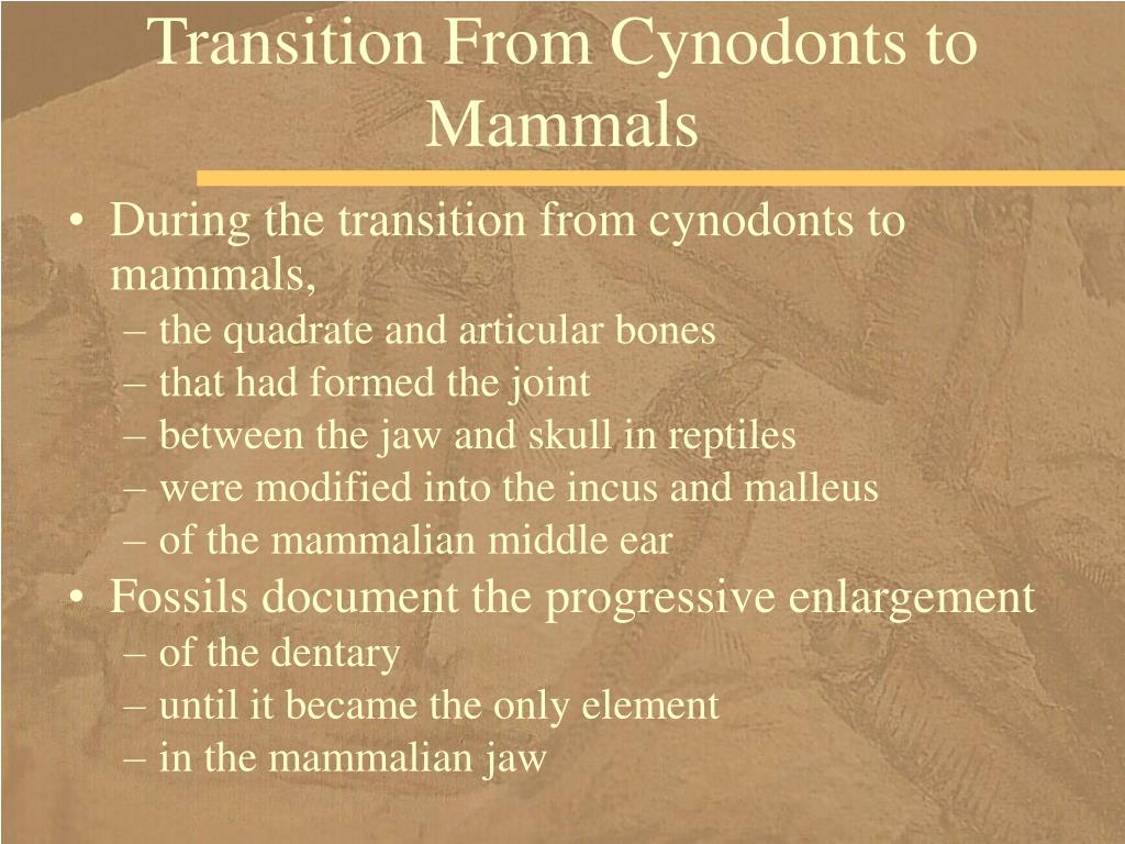 Transition From Cynodonts to Mammals