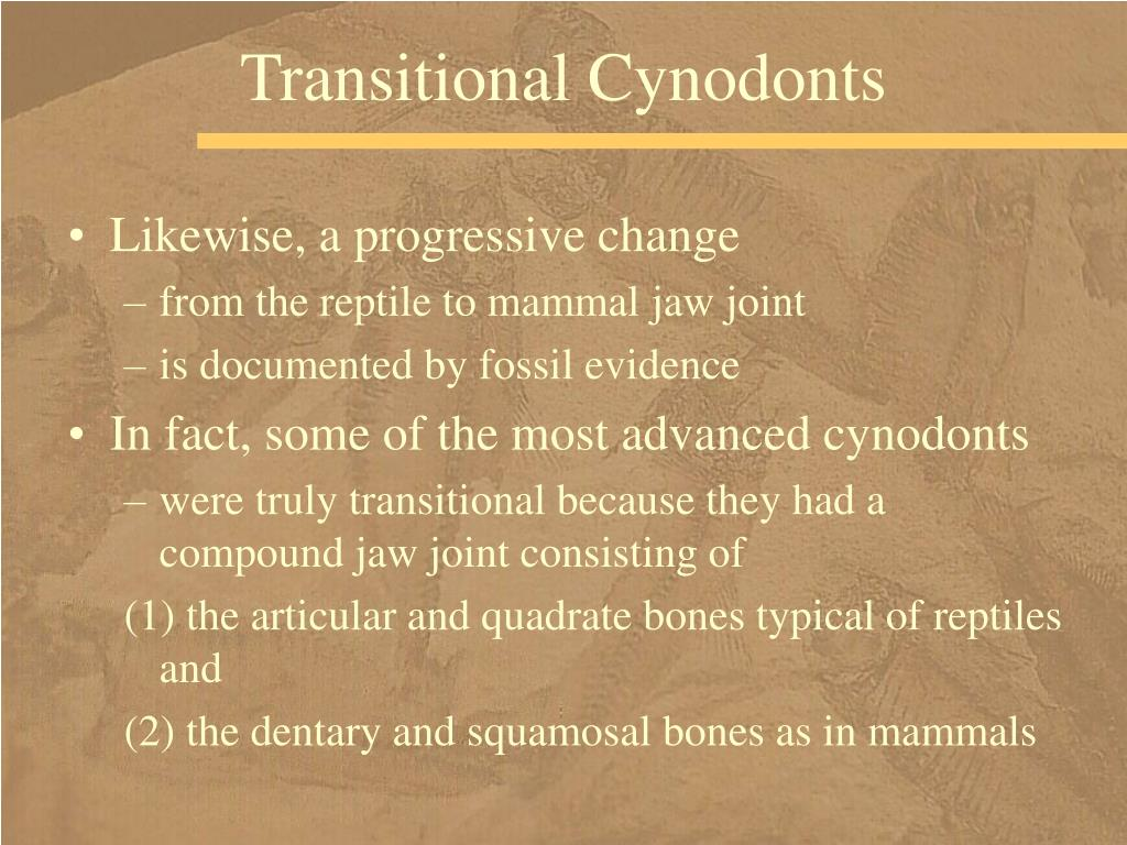 Transitional Cynodonts