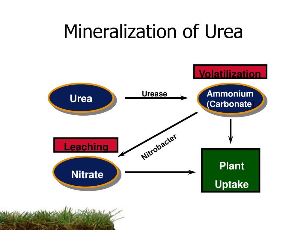 Mineralization of Urea