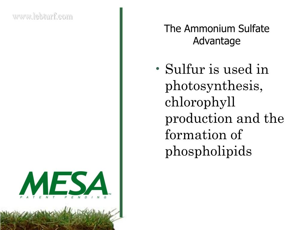 Sulfur is used in photosynthesis, chlorophyll production and the formation of phospholipids