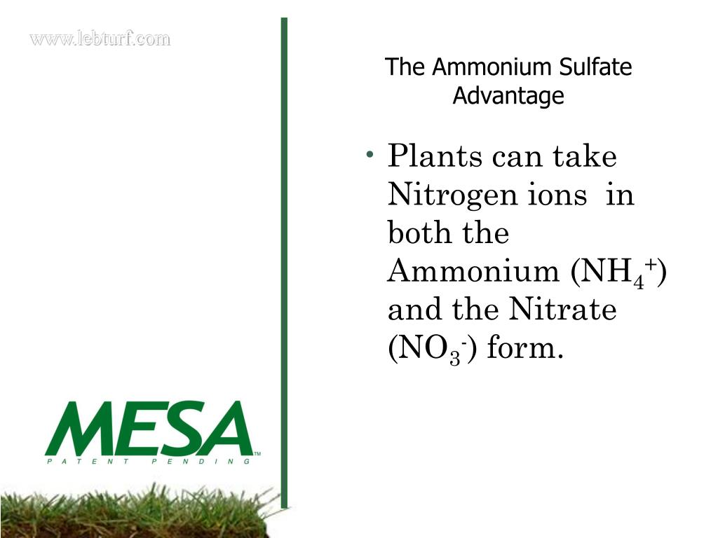 Plants can take Nitrogen ions  in both the Ammonium (NH