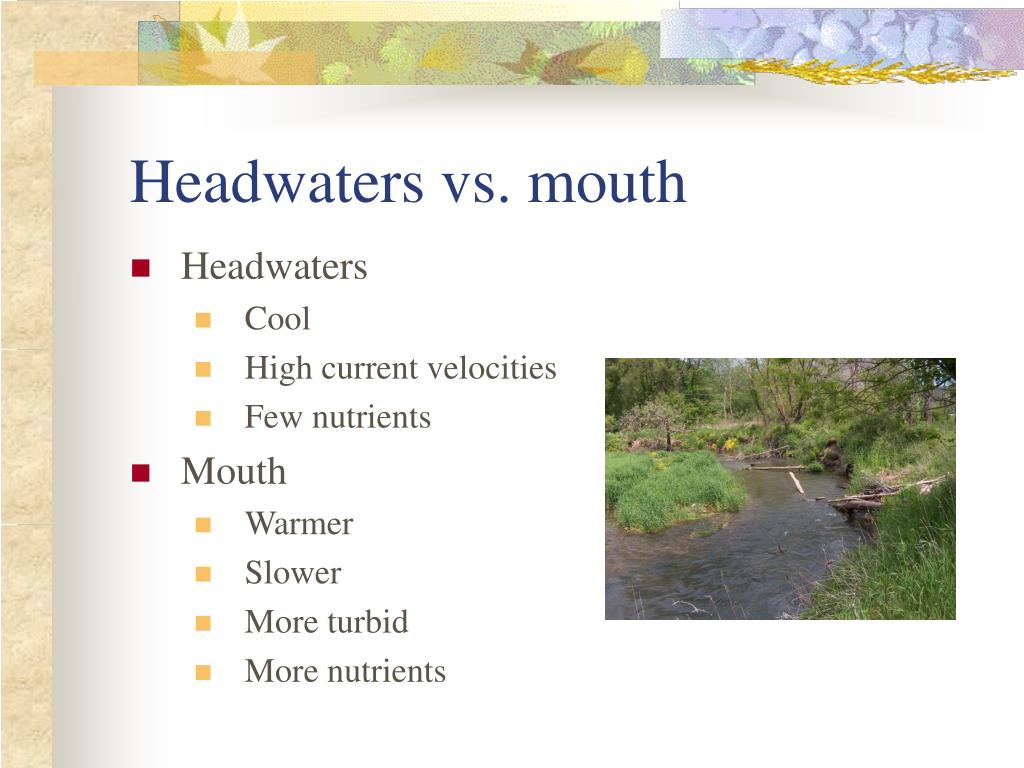 Headwaters vs. mouth