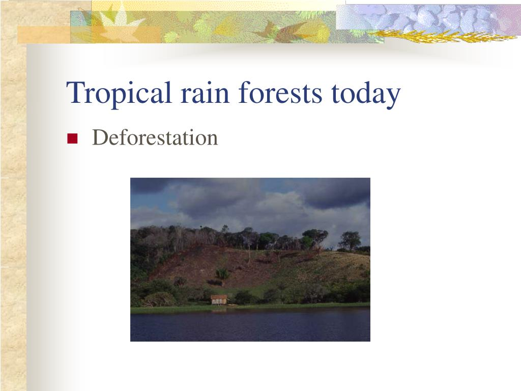 Tropical rain forests today
